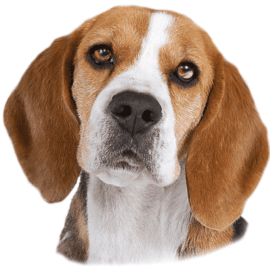 Nalepka pes – 2 kos v kompletu