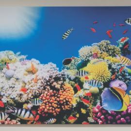 Slika na platnu koralni greben
